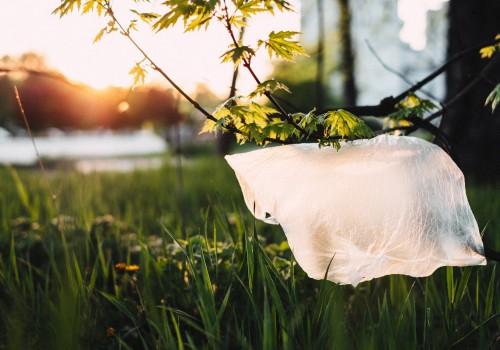Plastikfreie Verpackung aus Zellulose Hülsenreich